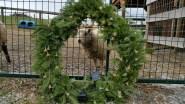 Nettle in wreath
