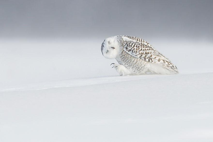 4. Против ветра, Канада. Фото: Доминик Рой.