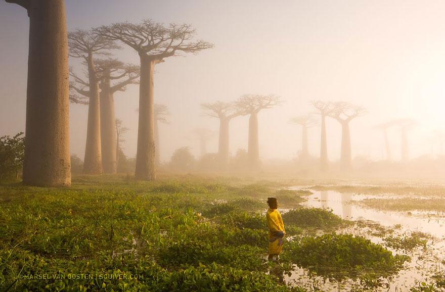 7. Мать леса, Мадагаскар. Фото: Marsel Van Oosten.