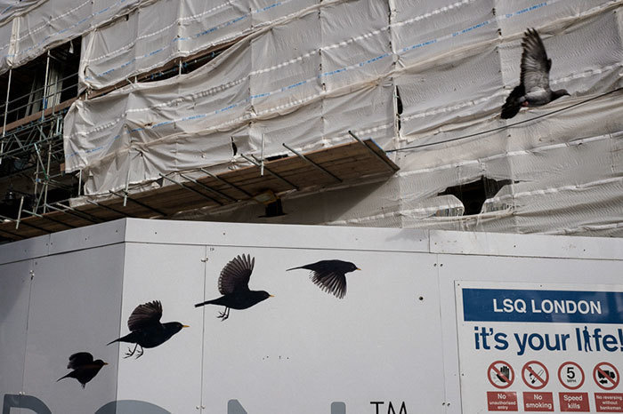 1. Птица пролетает в идеальном для кадра месте. Невероятная удача фотографа.