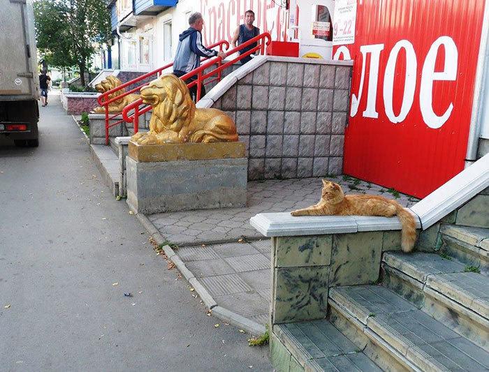 8. Кошка заняла свое законное место.