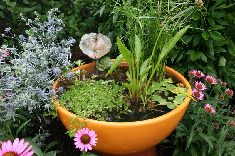 Water Plants Garden Ponds