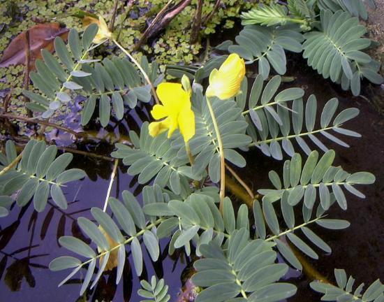 List Floating Plants