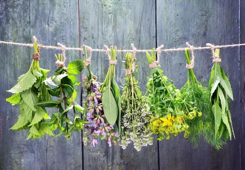 Herbs - Naturopathic Consultation - Herbs