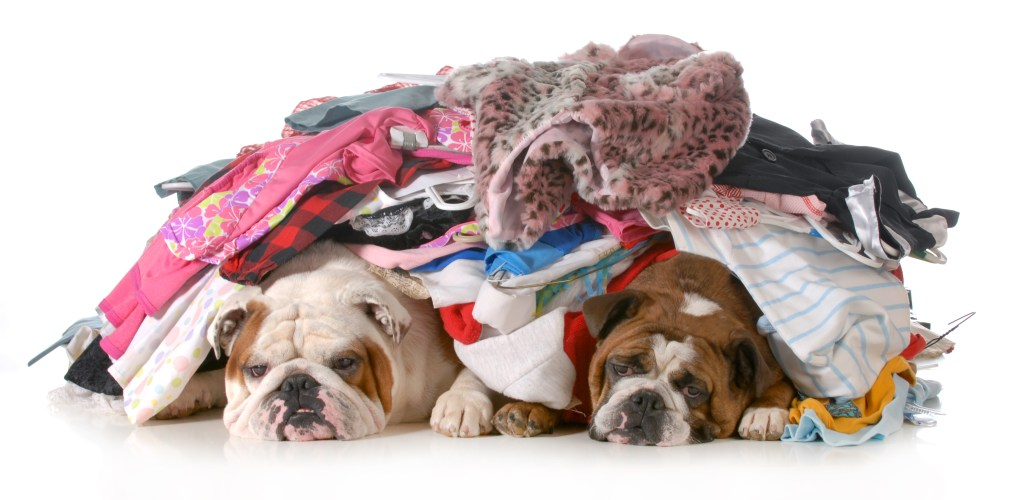 two bulldogs laying underneath a pile of laundry