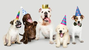 Dogs celebrating, wearing party hats