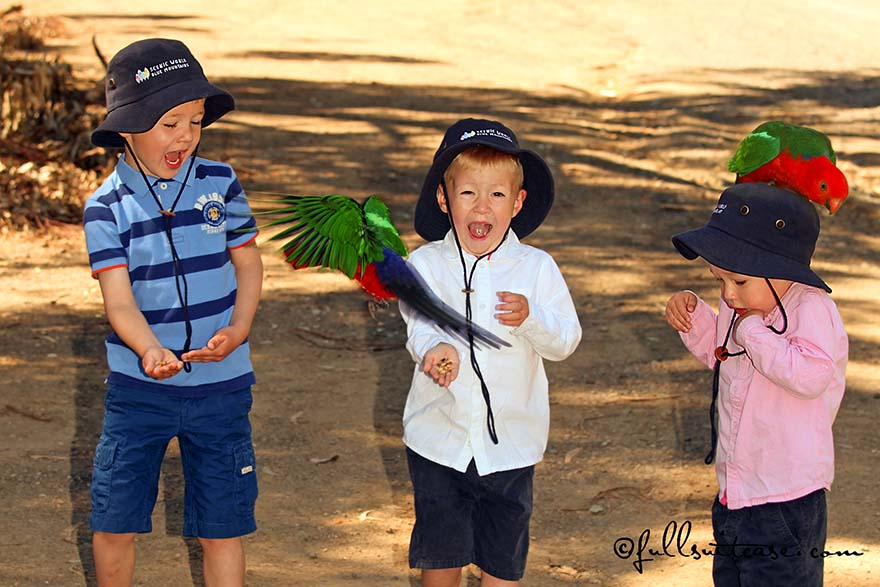 Children feeding wild colorful parrots in Australia
