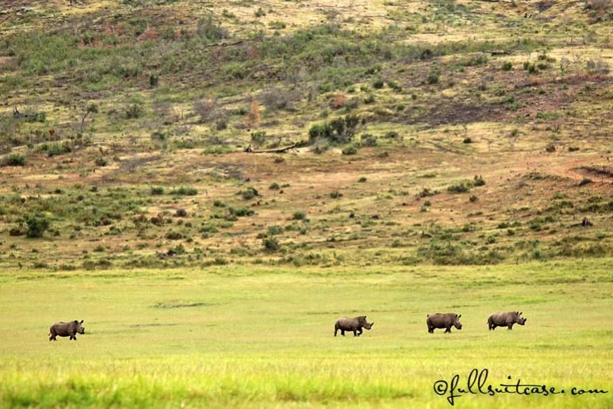 Family safari trip - rhinos at Plettenberg Bay Game Reserve