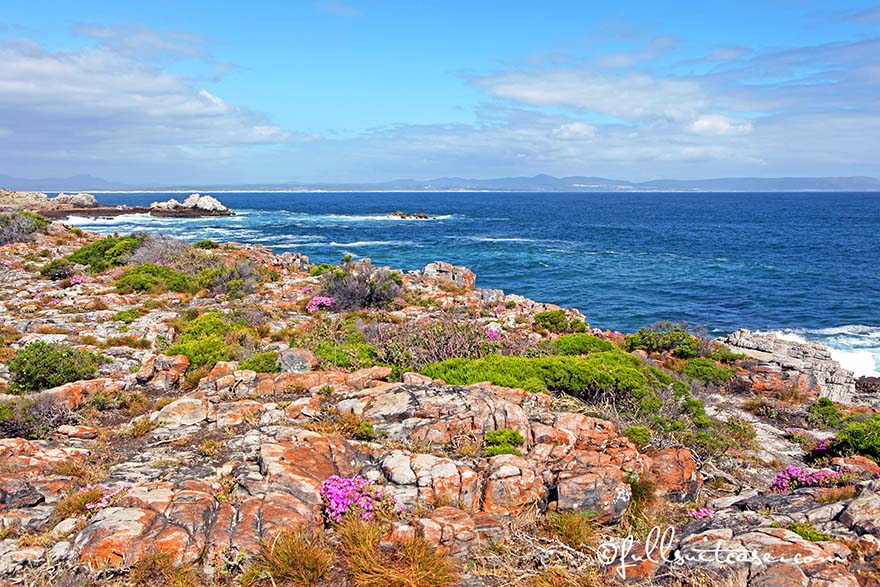 Hermanus beautiful coastline in South Africa