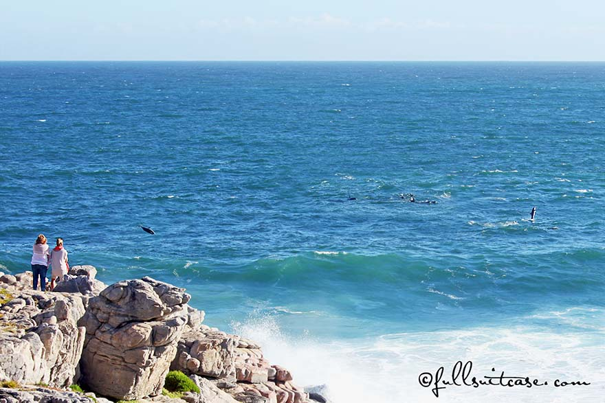 People watching dolphins on the coast of Hermanus in South Africa