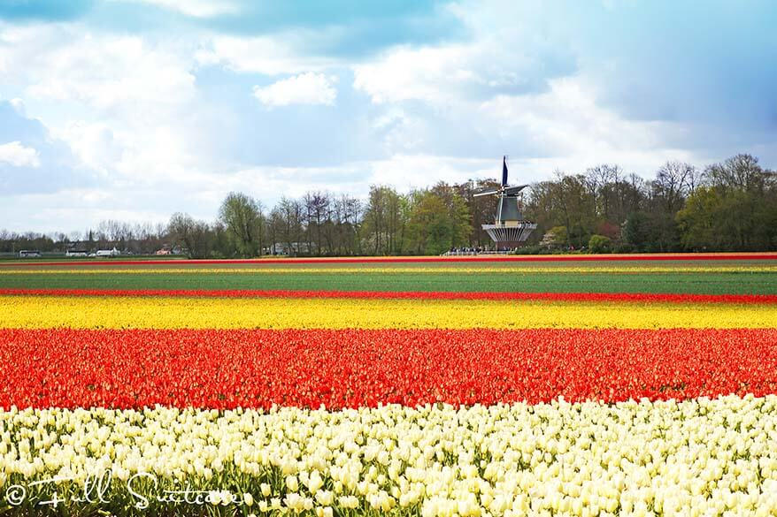 Image result for Dutch bulb fields keukenhof