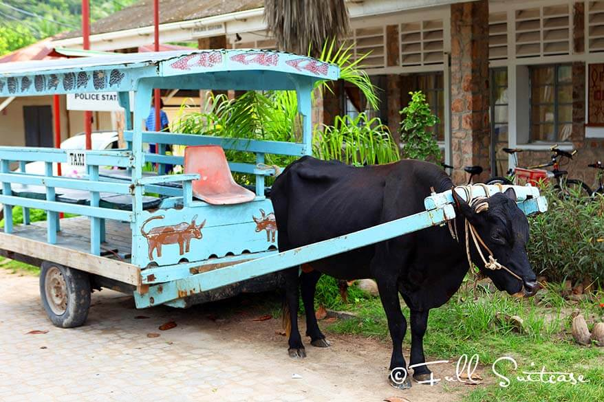 Traditional ox cart in La Digue Seychelles