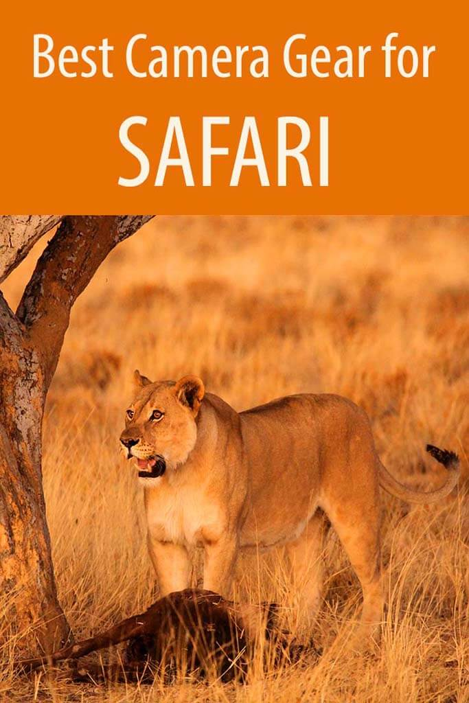 What camera to pack for safari in Africa. Complete guide to the best camera gear for wildlife photography.