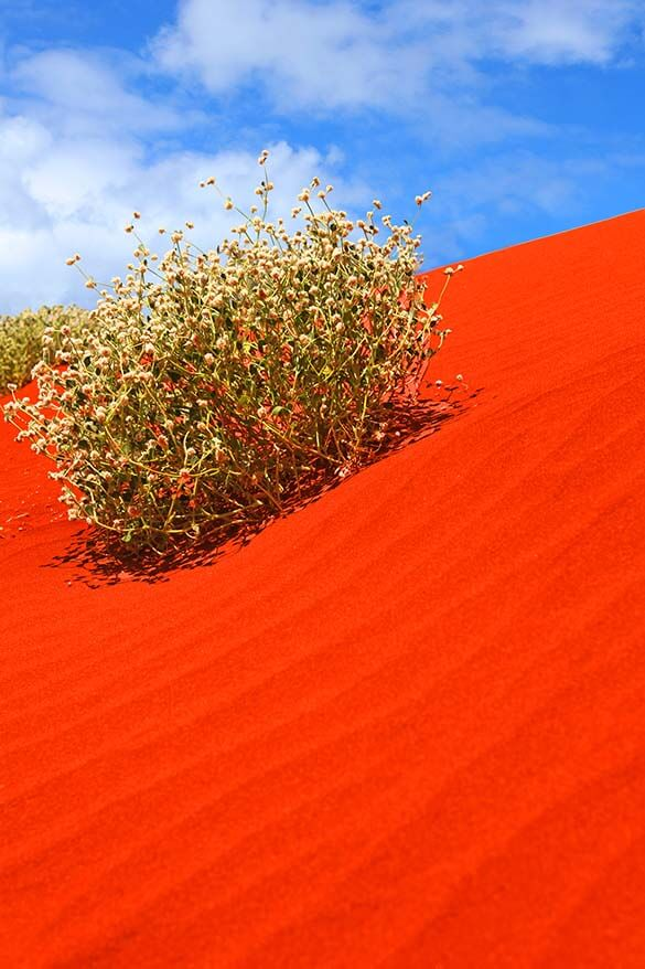 Red sand dunes in Australian Outback