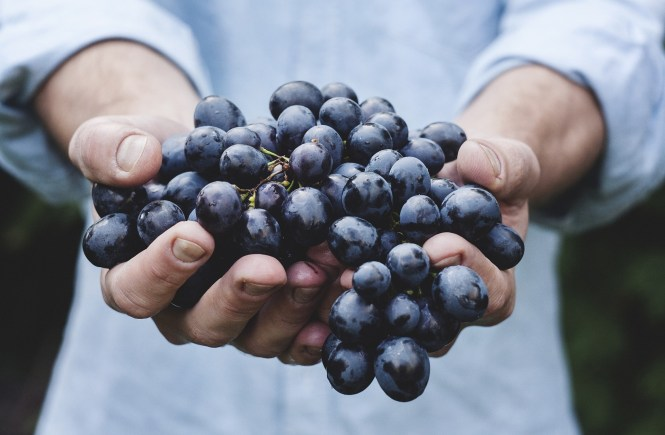 Grapes are a great snack to have whilst losing weight!