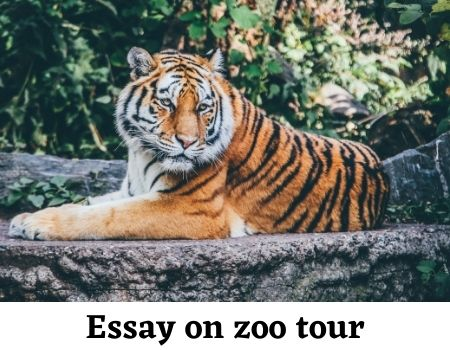 a visit to a zoo essay 1000 words for students