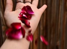 petals1-22nakx1