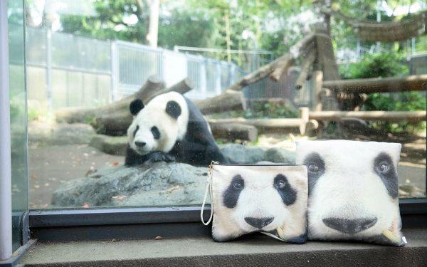 Myalka(ミャルカ)×上野動物園コラボパンダのシンシンバッグを飾った風景