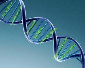 ADN Noajida