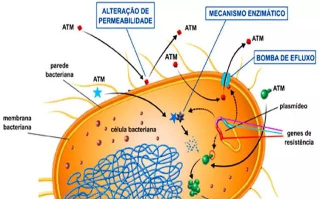 Estrutura celular bacteriana e os mecanismos de resistência bacteriana adquiridos por mutações