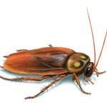 cucarachas fumigaciones manquehue sanitizacion