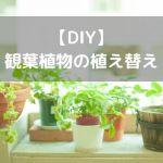 【DIY】観葉植物の植え替えをしてみた