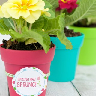 Flower Pot Gift Ideas