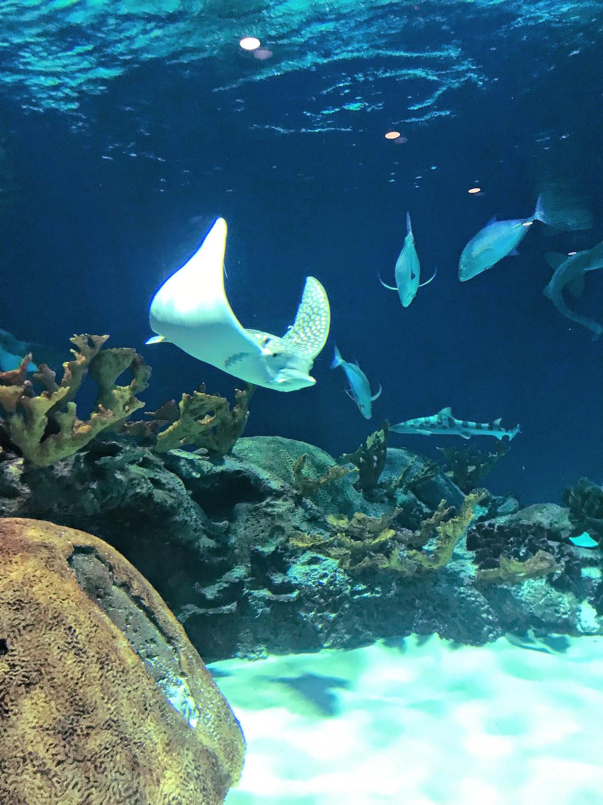 Phoenix Aquarium