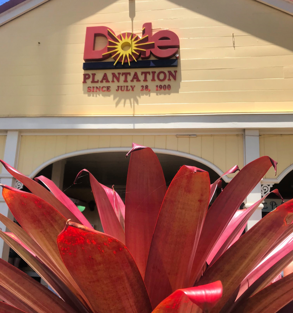 Fun at the Dole Plantation