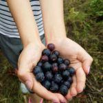 親子で収穫体験