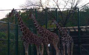 コアラやカンガルーのいるこども動物自然公園