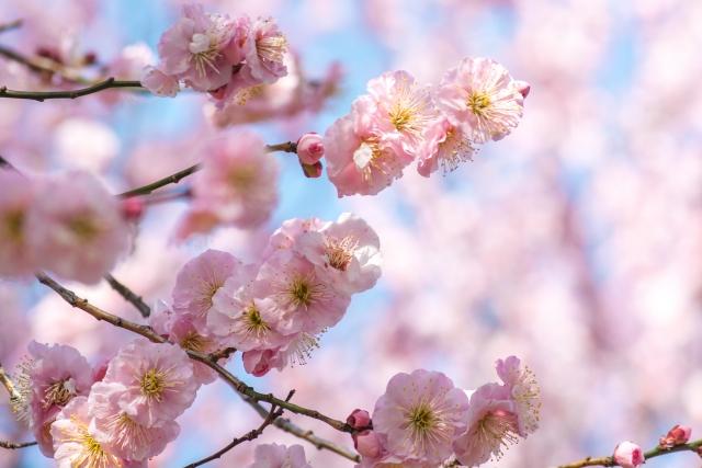 簡単「春の花」の平面折り紙動画まとめ!