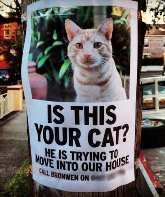 x10-11-13-caturday-funny-cat-photos14.jpg.pagespeed.ic.W3mAOxbT7l