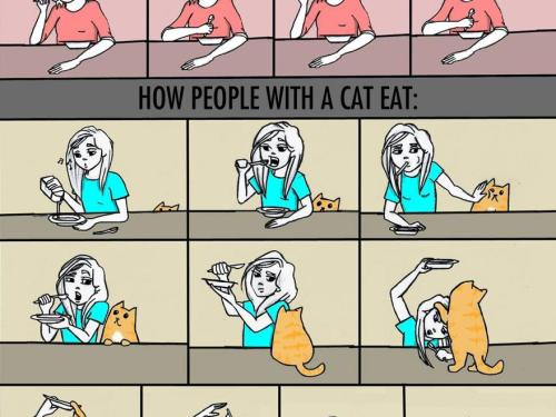 How People Without Cats Eat VS. How People With A Cat Eat…