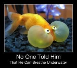 Poor goldfish needs help