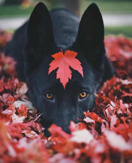 Pup in autumn leaves.