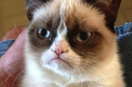 Today the original Grumpy Cat died. Rest in peace.