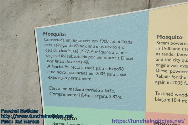 mosquito001