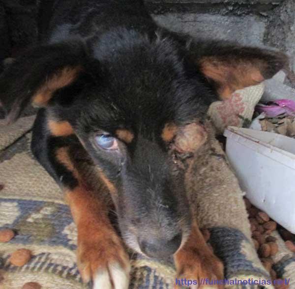 Imagem retirada da página do facebook da Ajuda Alimentar Cães