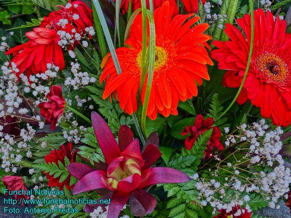 flores06
