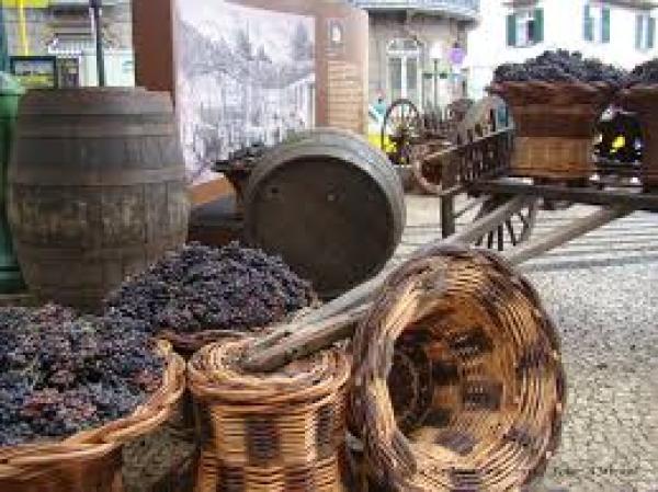 O vinho Madeira será o rei da festa na cidade, a partir de 30 de agosto.