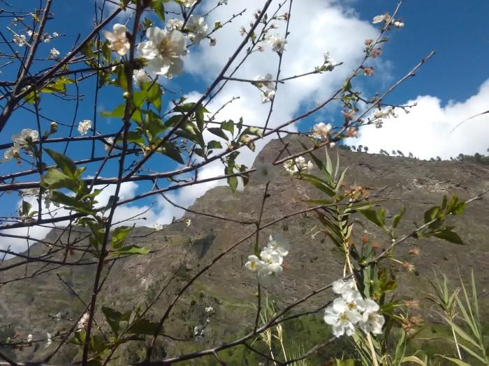 curral das freiras natureza cerejeiras montanha