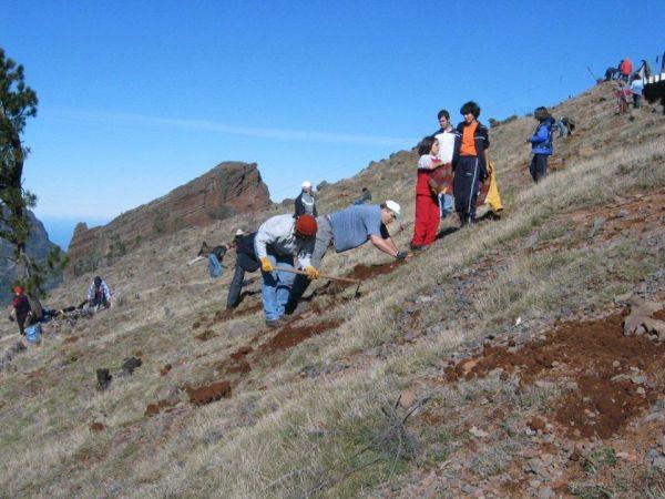 Pico do Areeiro 2003 Parque Ecológico
