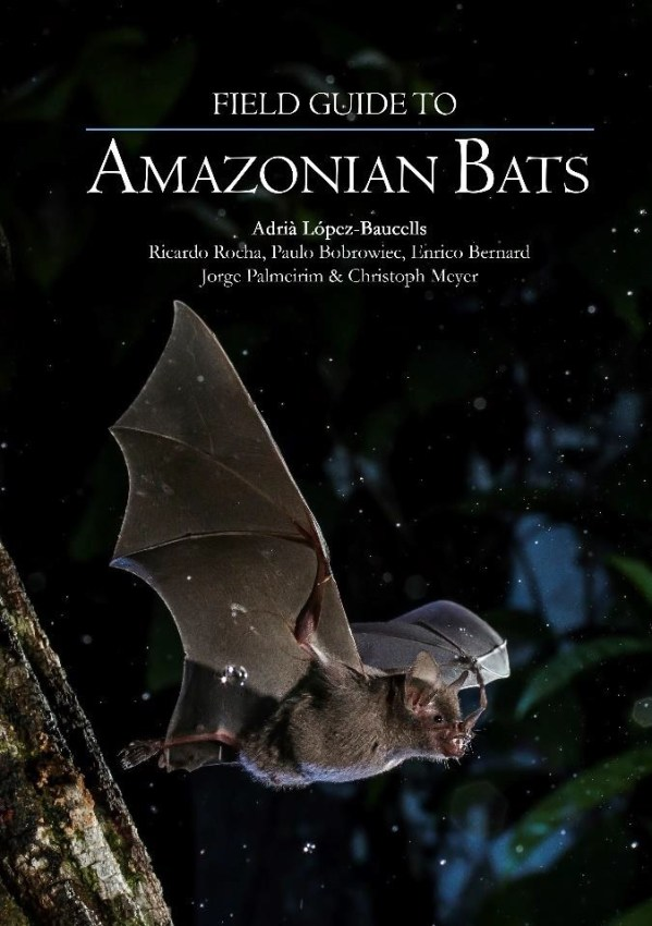 morcegos2
