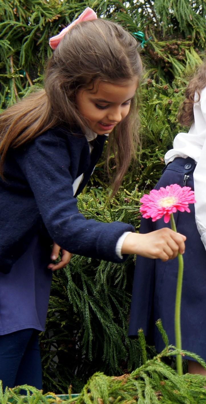 muro da esperança, festa da flor