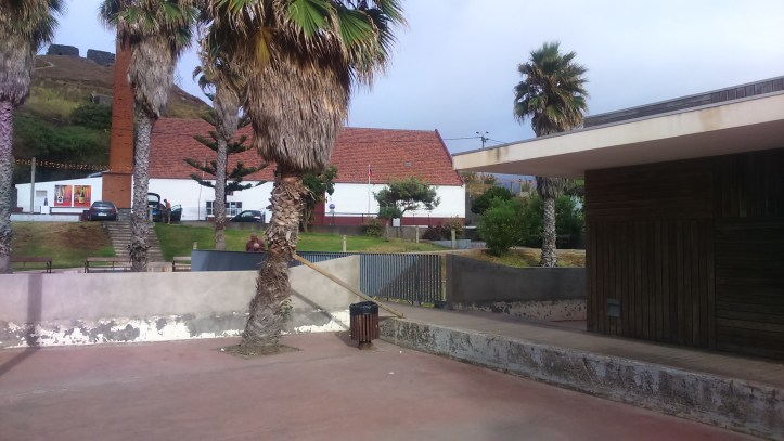 Palmeira Porto da Cruz A