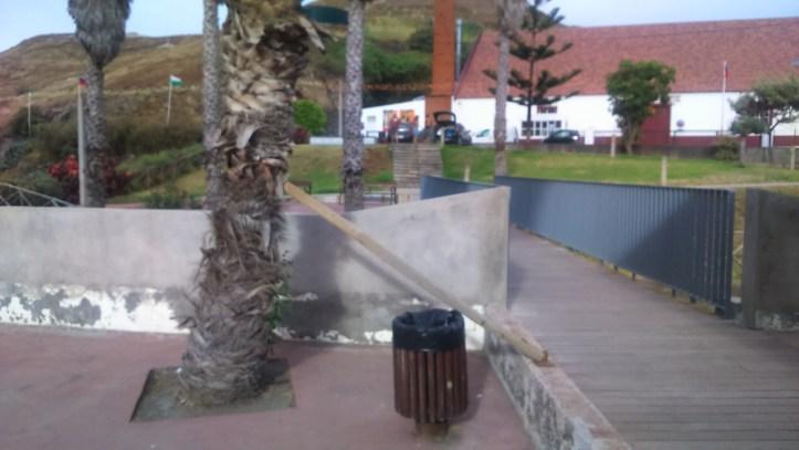 Palmeira Porto da Cruz B