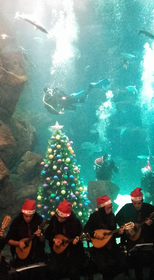 Árvore no aquário