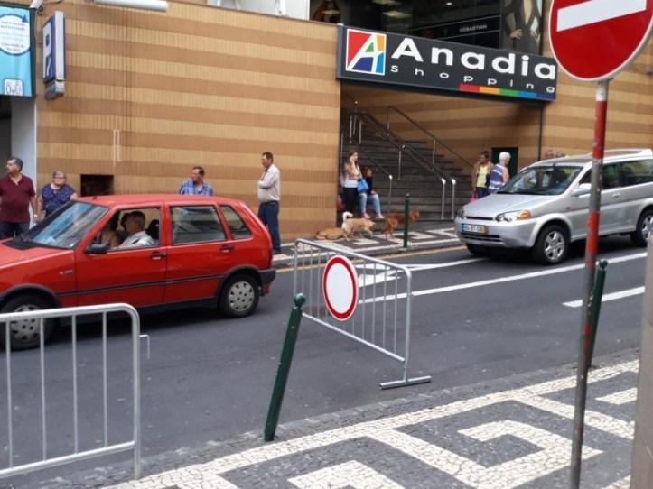 Fernao Ornelas B