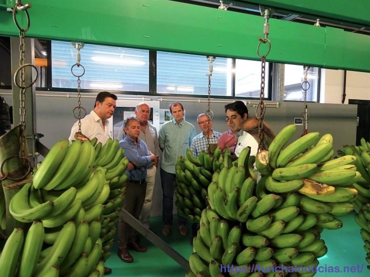 banana jpp gesba